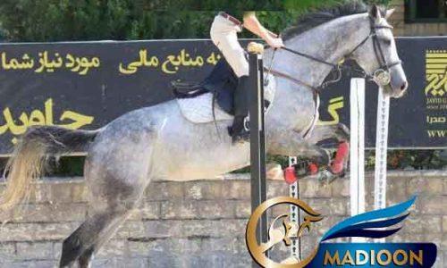 خرید اسب و فروش اسب_ناز جرن