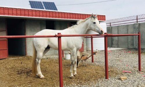 خرید اسب و فروش اسب_سیلور سیتی