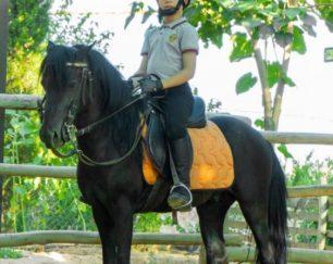 خرید اسب و فروش اسب_پونی منحصر به فرد