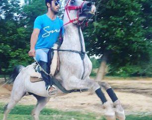 خرید اسب و فروش اسب_اسب دره شوری