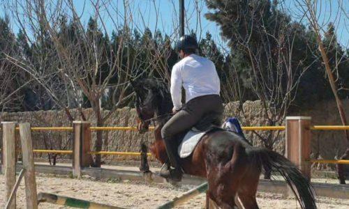 خرید اسب و فروش اسب_اسب تروبرد با تمام لوازم