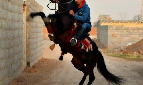 خرید اسب و فروش اسب_کهربا