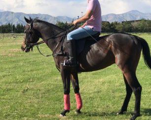 خرید اسب و فروش اسب_بهموم