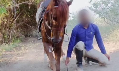 خرید اسب و فرش اسب_حیرت