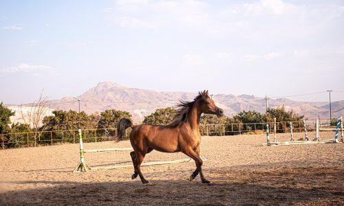 خرید اسب و فروش اسب_ ساحر کنز