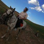 خرید اسب و فروش اسب_ستاره